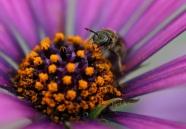 Munching Pollen