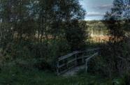 Swampy Walkway