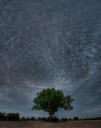 Solo Tree