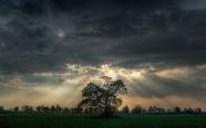 Light-Tree